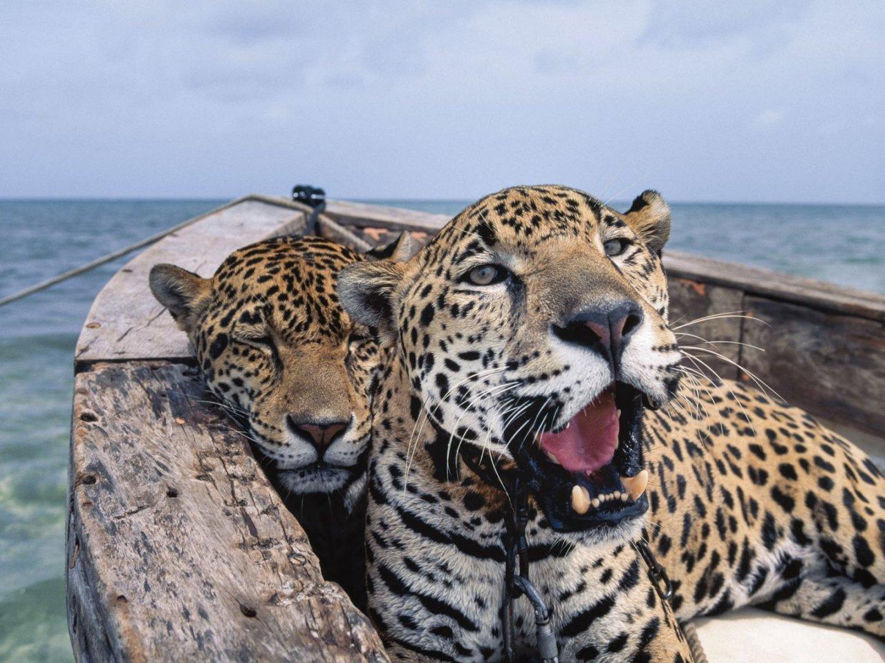 national-geo-leopard-43