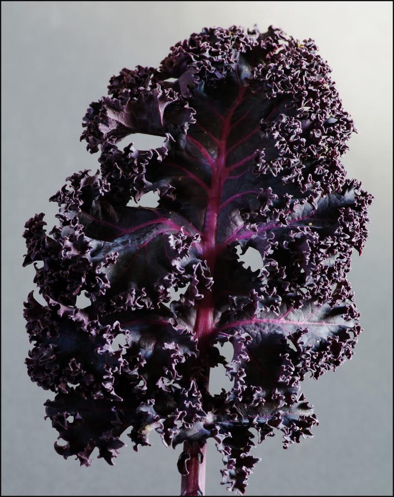 PurpleKale004borderedcurvescopy